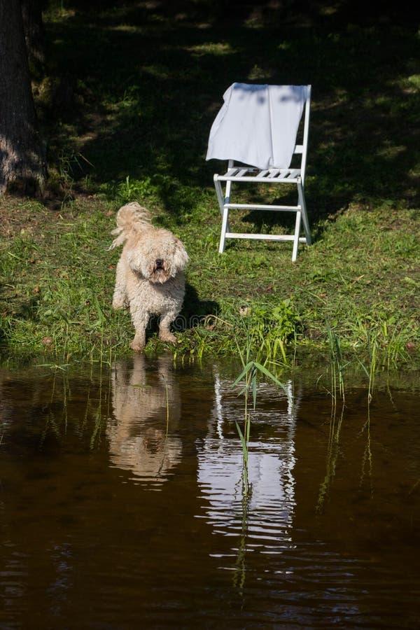 Perro peludo contra el cielo azul y agua y bosque verde y cañas en el día de verano suuny fotografía de archivo