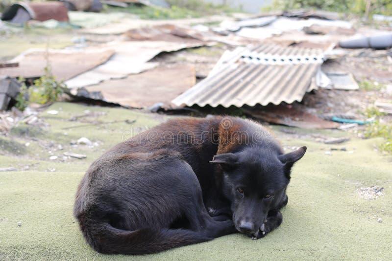 Perro perdido foto de archivo