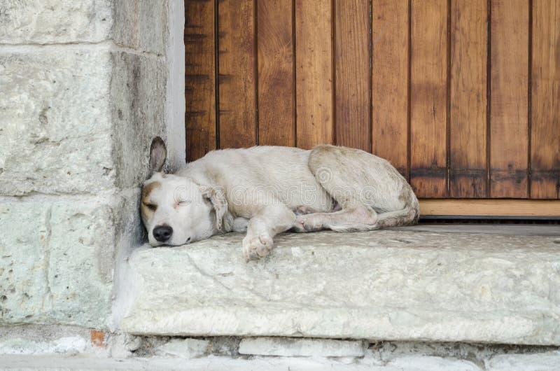 Perro perdido blanco que duerme en la calle imagenes de archivo