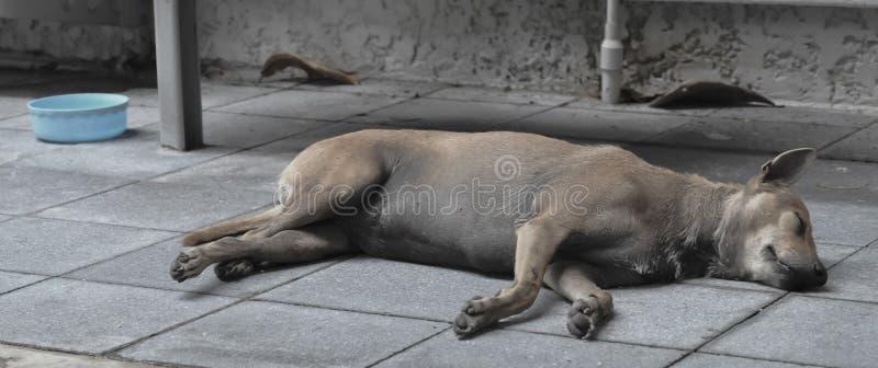 Perro perdido cansado que duerme en la tierra en Asia imágenes de archivo libres de regalías