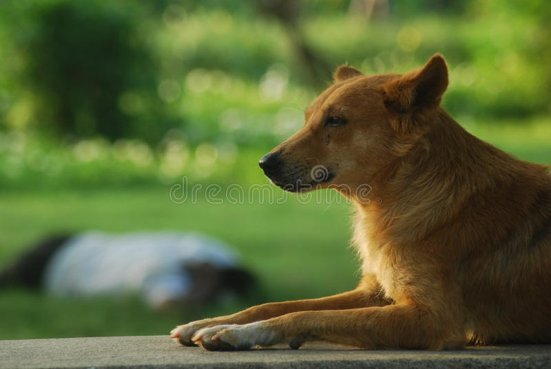 Perro perdido en el parque fotos de archivo