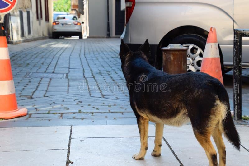 Perro perdido en la calle imágenes de archivo libres de regalías