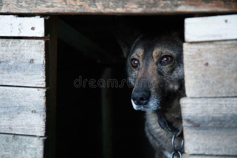 Perro perdido en una caja de madera imagenes de archivo
