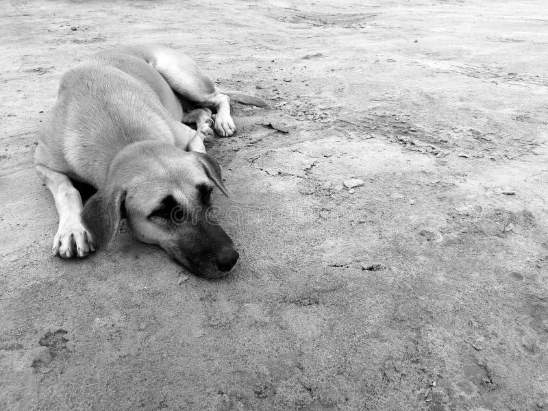 Perro perdido hambriento esperar alguien para dar la comida en la tierra sucia fotos de archivo