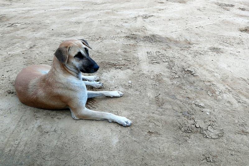 Perro perdido hambriento esperar alguien para dar la comida en la tierra sucia imagenes de archivo