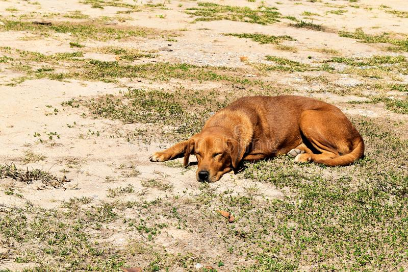 Perro perdido hambriento esperar alguien para dar la comida en la tierra sucia imagen de archivo libre de regalías