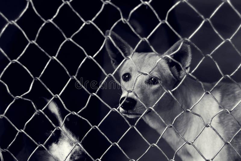 Perro perdido infeliz en una jaula foto de archivo