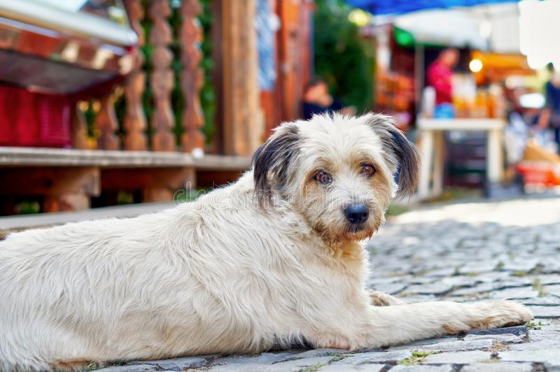 Perro perdido lindo con los ojos tristes fotos de archivo
