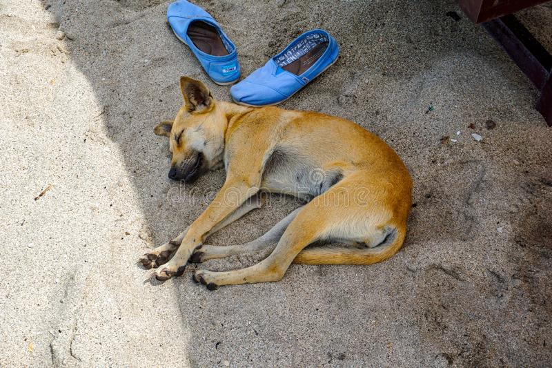 Perro perdido que duerme en la playa arenosa imagen de archivo