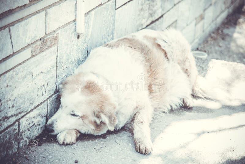 Perro perdido sin hogar imagenes de archivo