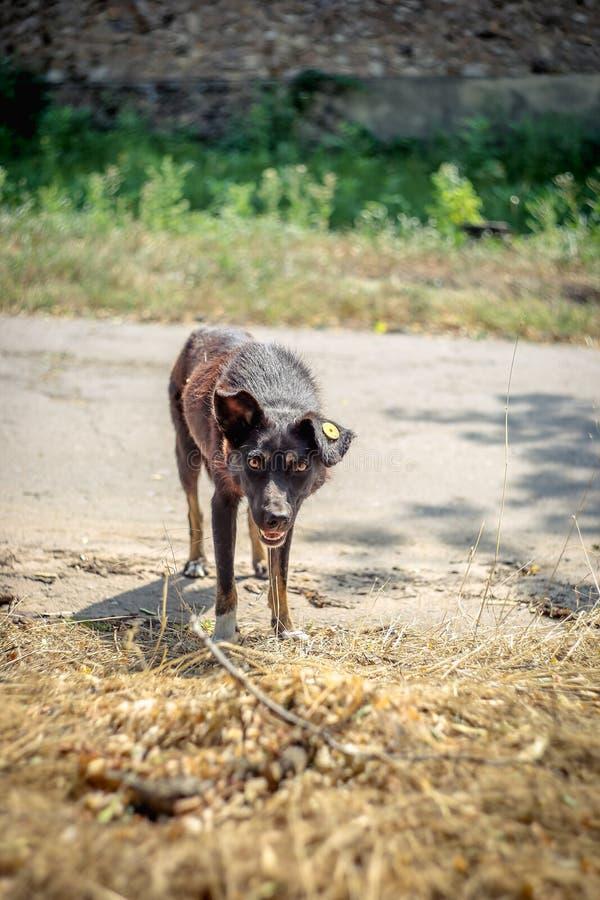 Perro perdido sin hogar abandonado con un microprocesador fotografía de archivo