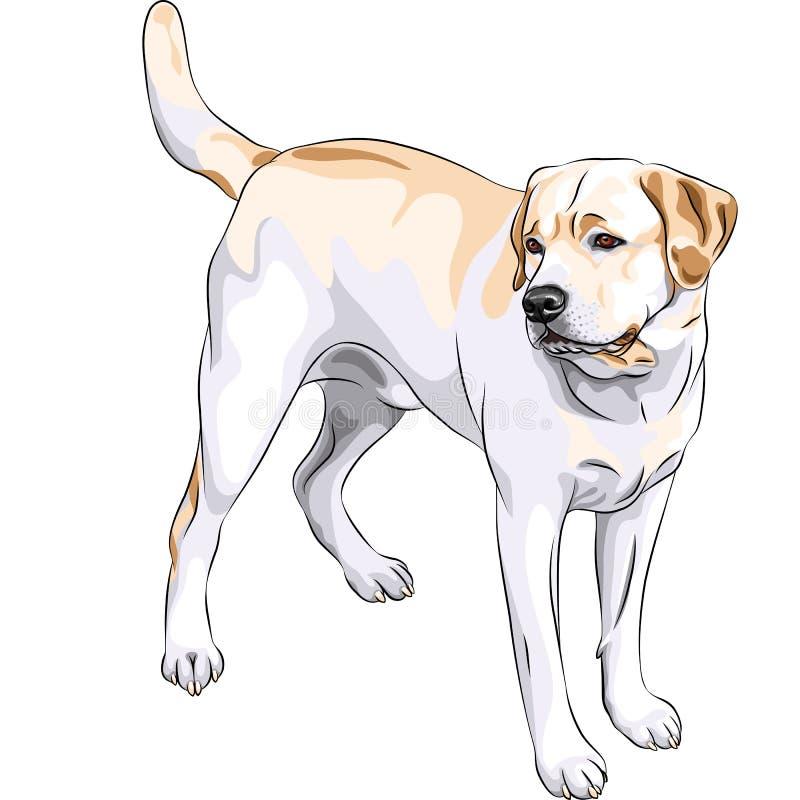 perro perdiguero de Labrador amarillo de la casta del perro de arma del vector ilustración del vector