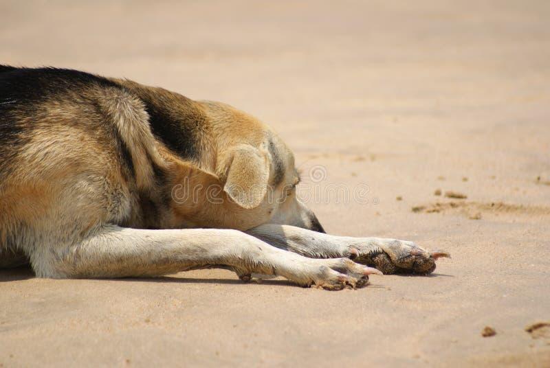 Perro perezoso en la playa