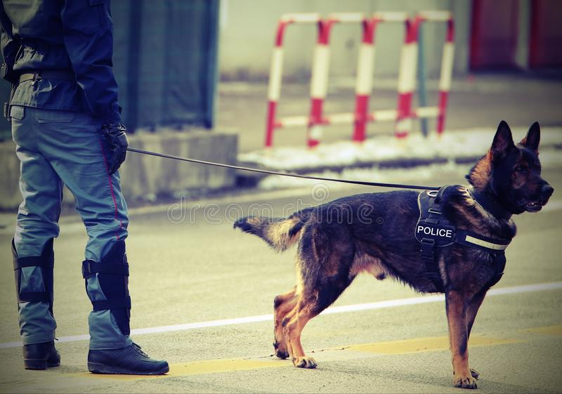 Perro policía con POLICÍA del texto con efecto del vintage fotos de archivo