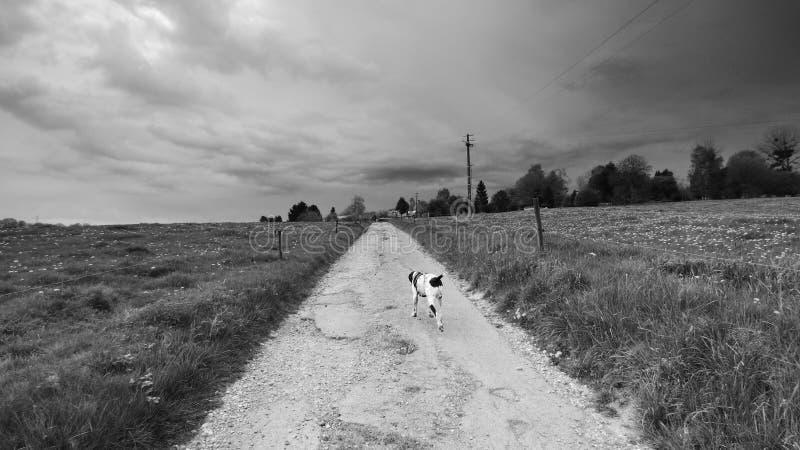 Perro que camina debajo del cielo que amenaza imagen de archivo