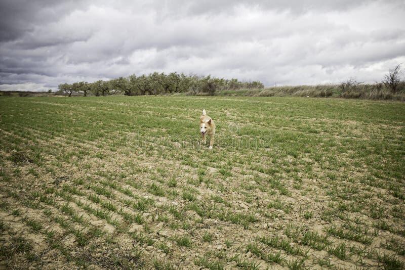 Perro que corre a través del bosque imagenes de archivo