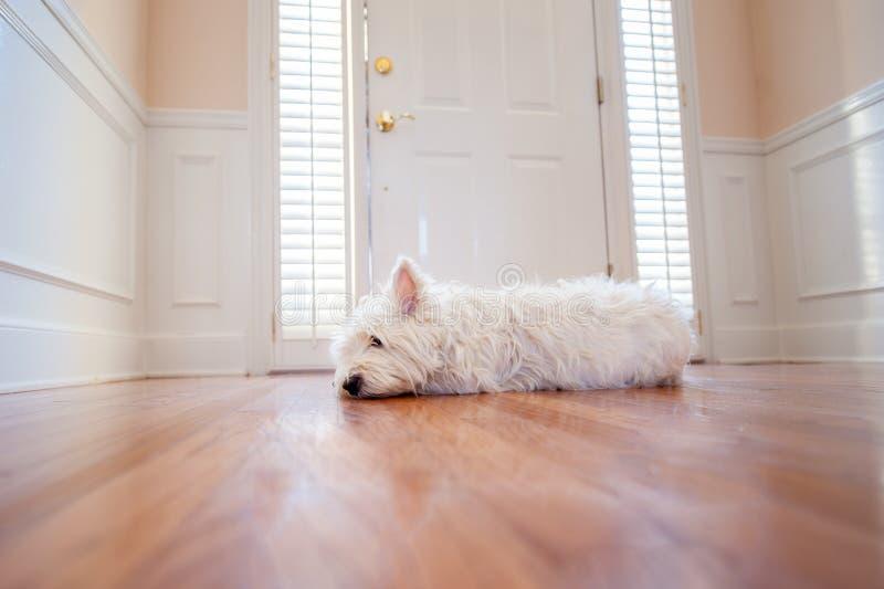 Perro que espera en la puerta fotografía de archivo