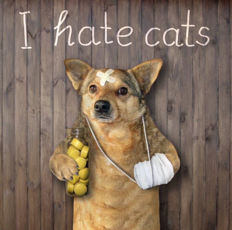 Perro que ha sufrido de gatos foto de archivo