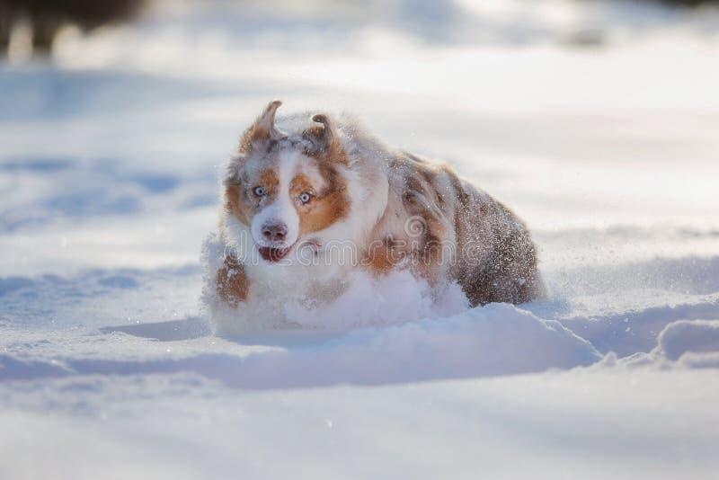Perro que juega en un parque nevado fotografía de archivo