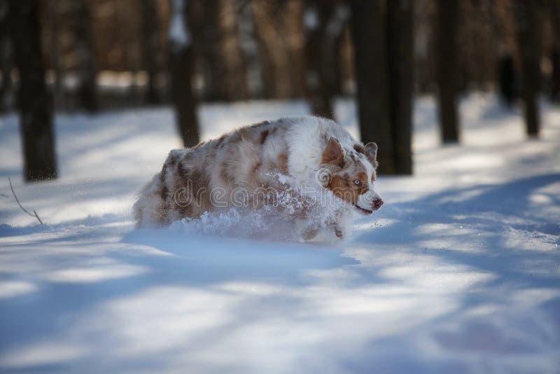 Perro que juega en un parque nevado fotos de archivo