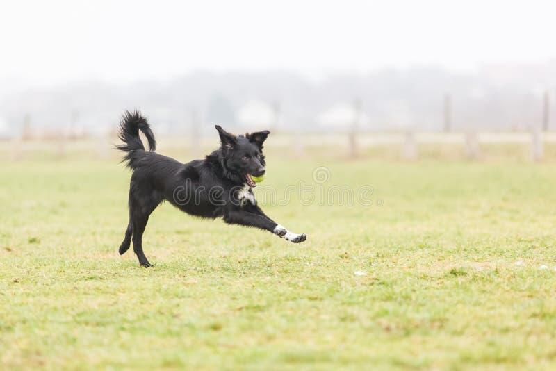 Perro que juega feliz imágenes de archivo libres de regalías