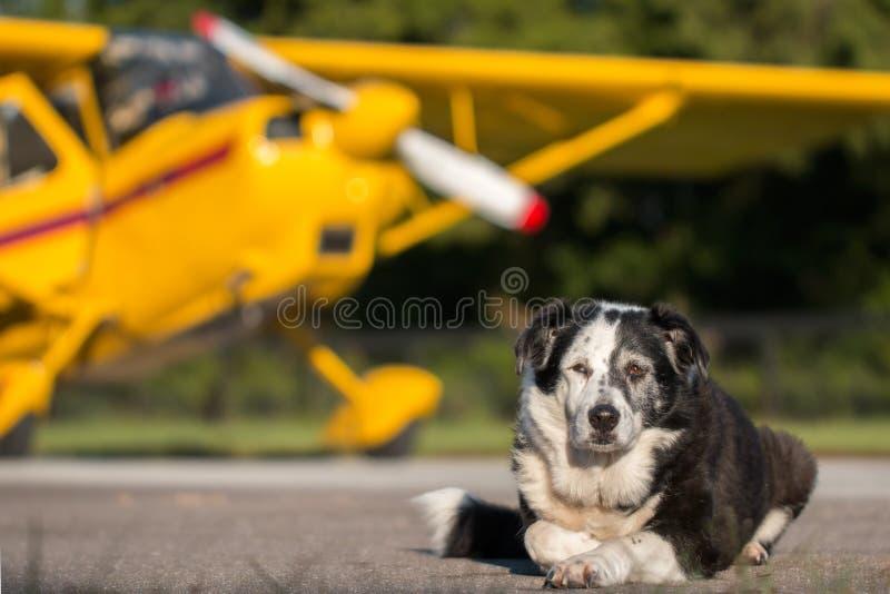 Perro que se acuesta delante del aeroplano imagen de archivo