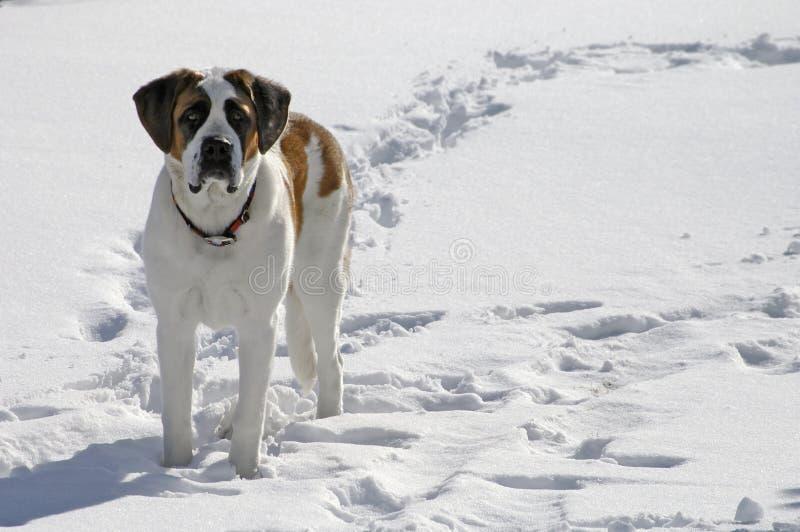 Perro que se coloca en nieve imagen de archivo