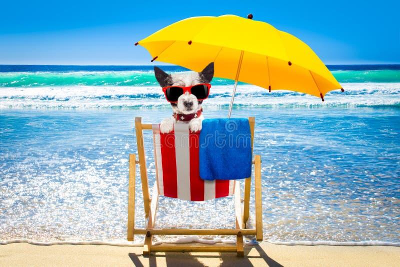 Perro que se relaja en una silla de playa fotos de archivo libres de regalías
