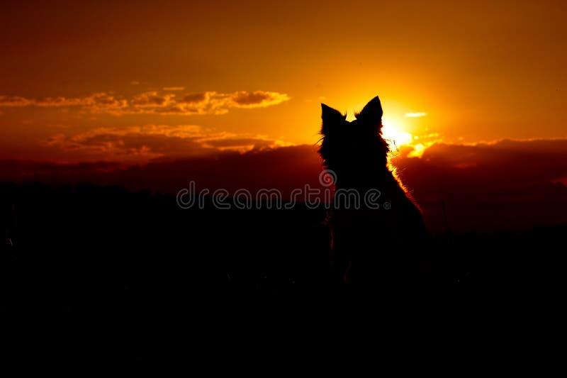 Perro que se sienta en puesta del sol Silueta del border collie fotos de archivo libres de regalías