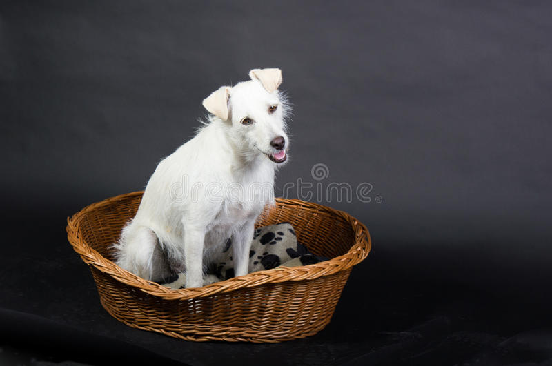 Perro que se sienta en una cesta fotos de archivo