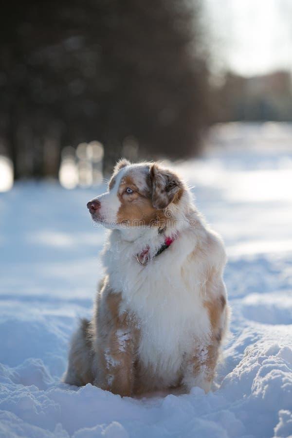 Perro que se sienta en una nieve acumulada por la ventisca en el parque para un paseo fotografía de archivo libre de regalías