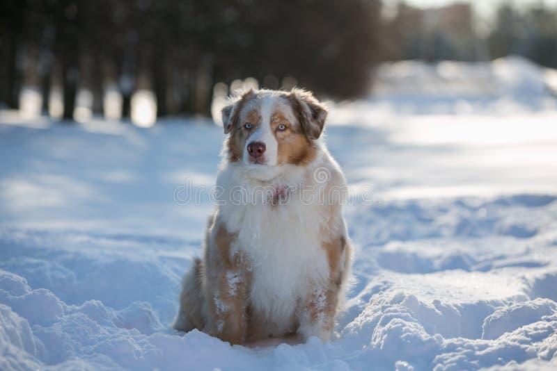 Perro que se sienta en una nieve acumulada por la ventisca en el parque para un paseo fotos de archivo libres de regalías