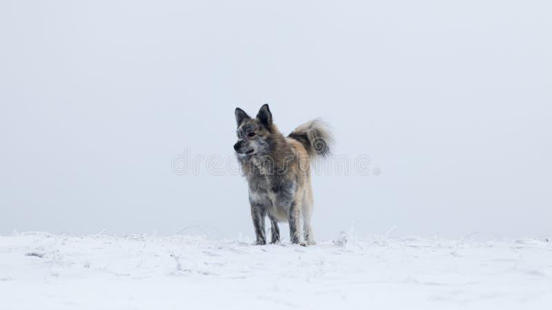 Perro que se sienta solamente en un paisaje del invierno en las montañas de Rumania fotos de archivo