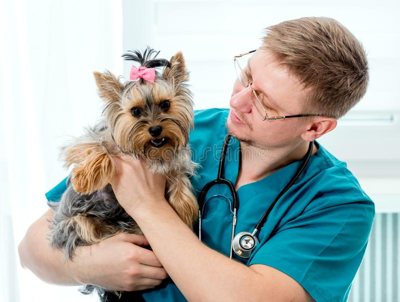 Perro que se sostiene veterinario en las manos en la clínica del veterinario foto de archivo libre de regalías