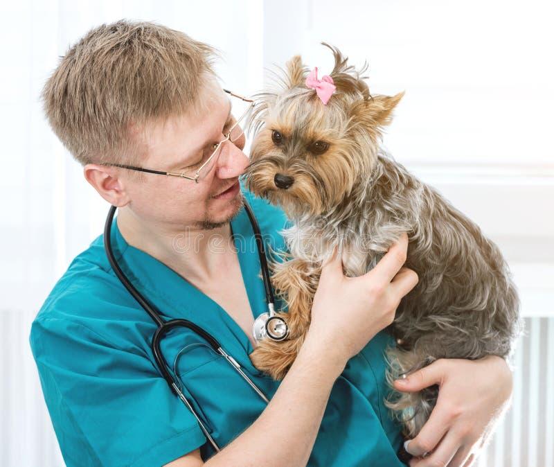 Perro que se sostiene veterinario en las manos en la clínica del veterinario imagenes de archivo