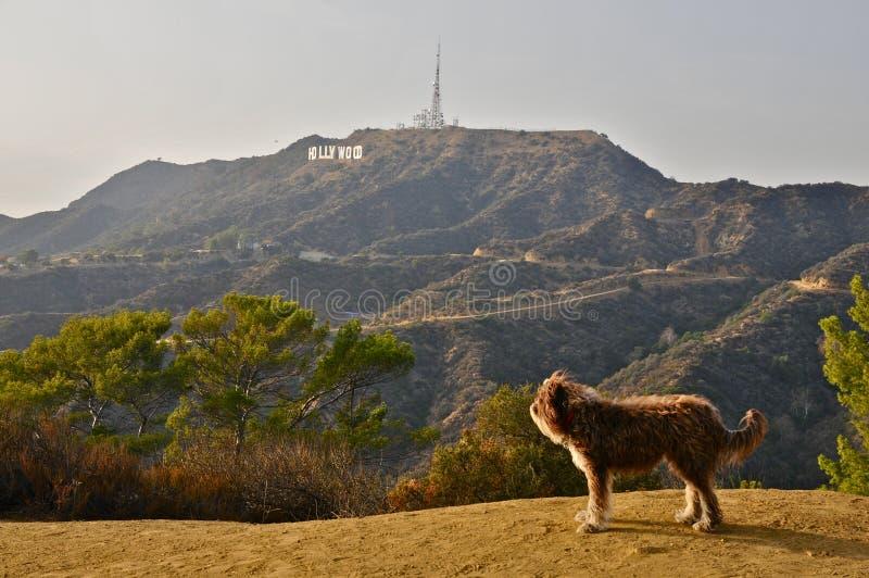 Perro que sueña con Hollywood imágenes de archivo libres de regalías