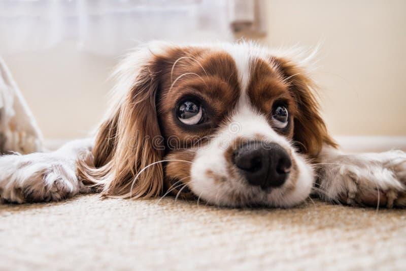 Perro, raza del perro, nariz, perro como mam?fero