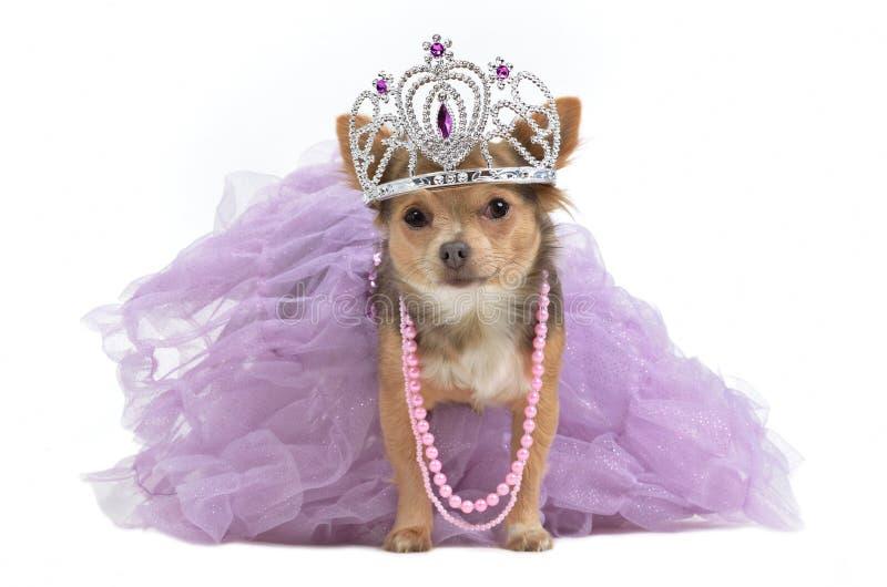 Perro real con la corona fotos de archivo