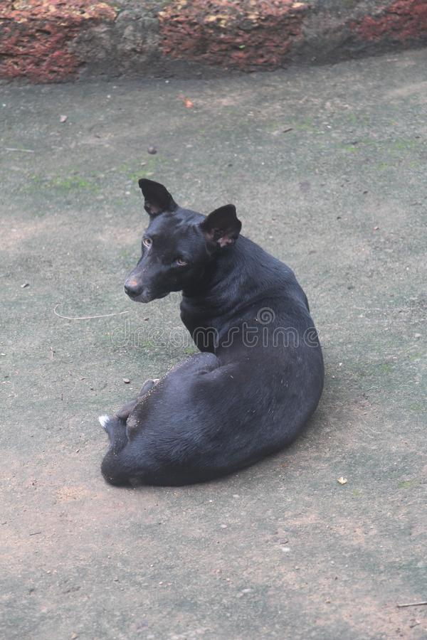 Perro imagenes de archivo
