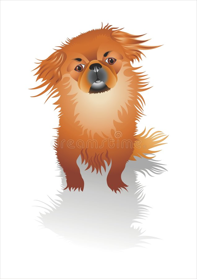 Perro rojo foto de archivo libre de regalías