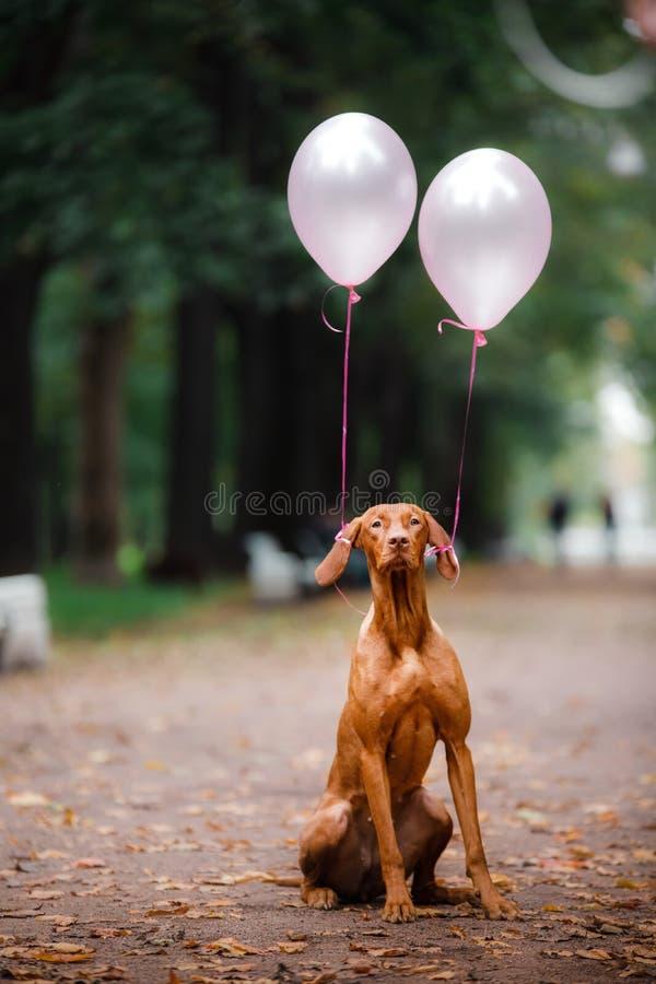 Perro rojo al aire libre en hierba verde fotografía de archivo libre de regalías