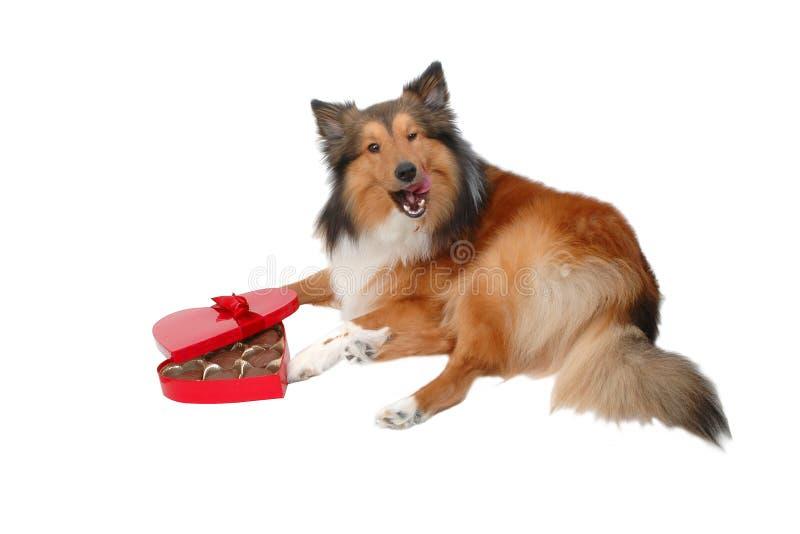 Perro romántico 9 fotografía de archivo libre de regalías