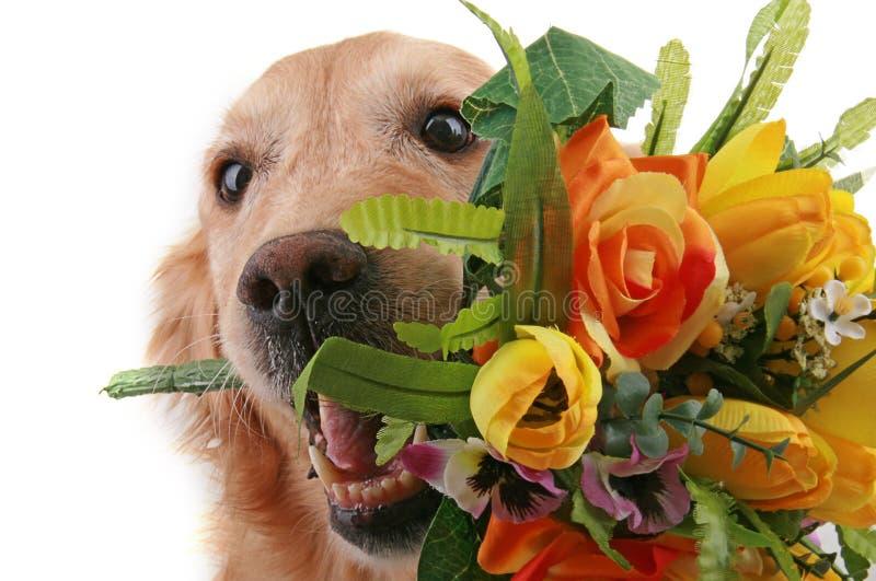 Perro romántico con la flor fotos de archivo libres de regalías