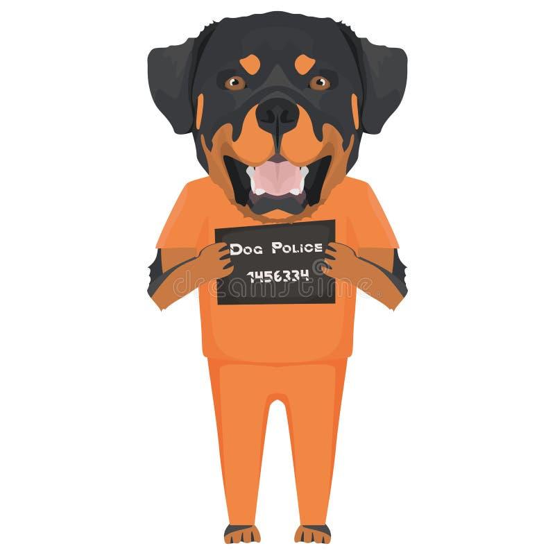 Perro Rottweiler de la ropa de la prisi?n del Mugshot libre illustration