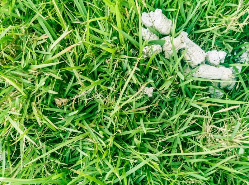 perro seco de las heces fotografía de archivo libre de regalías