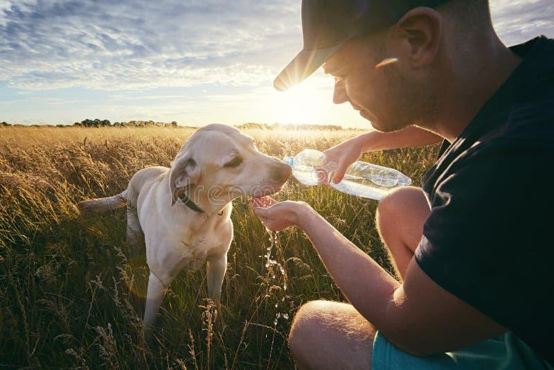 Perro sediento en la puesta del sol foto de archivo libre de regalías
