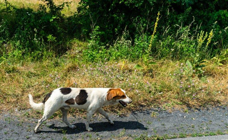 Perro sin hogar agradable foto de archivo libre de regalías