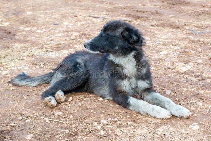 Perro sin hogar sucio foto de archivo
