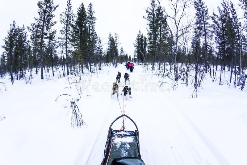 Perro sledding con los perros esquimales en paisaje hermoso imagen de archivo libre de regalías