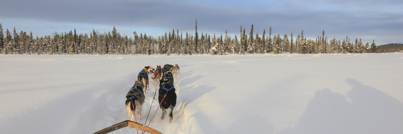 Perro sledding en Laponia imagen de archivo